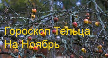 телец-ноябрь
