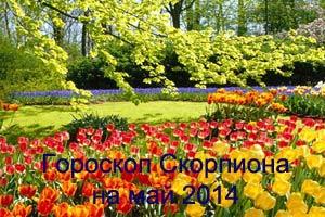 Гороскоп для Скорпиона май 2014